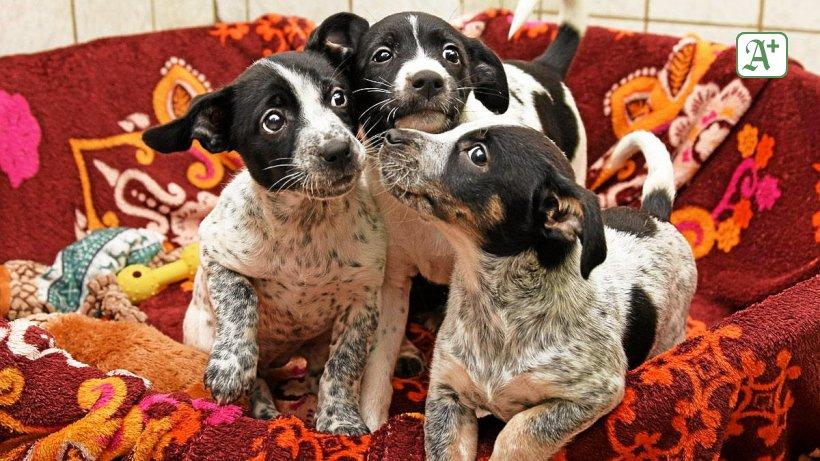 Illegaler Welpenhandel? Vier Hunde in Hamburg ausgesetzt
