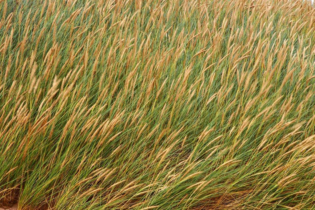 Dünenlandschaft Im Garten Anlegen so holen sie sich ein bisschen sylt in den garten garten umwelt
