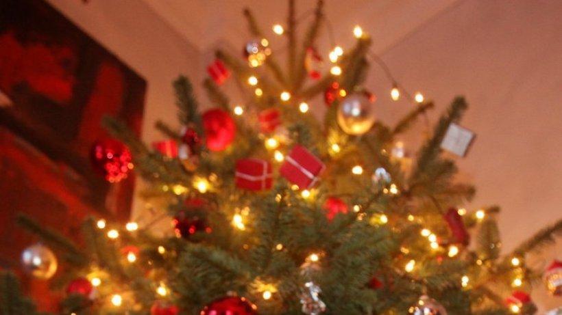 weihnachtsb ume werden ab sofort kostenlos entsorgt hamburg aktuelle news aus den. Black Bedroom Furniture Sets. Home Design Ideas
