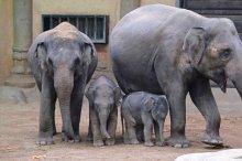 Kanja, der am Wasser Geborene - so heißt von nun an der jüngste Elefantennachwuchs in Hagenbecks Tierpark