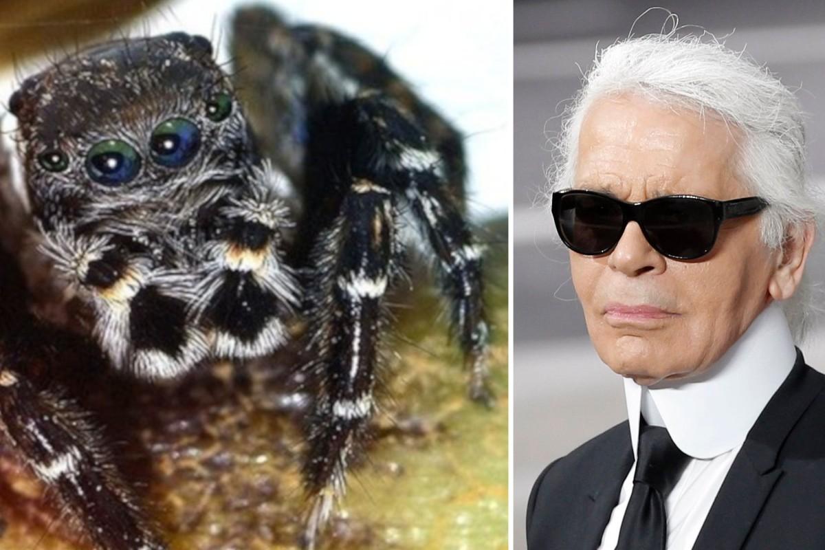 Hamburger Forscher benennen Spinne nach Karl Lagerfeld