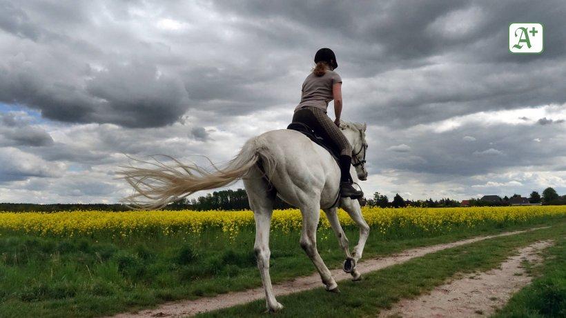 Partnersuche reiter pferdefreunde