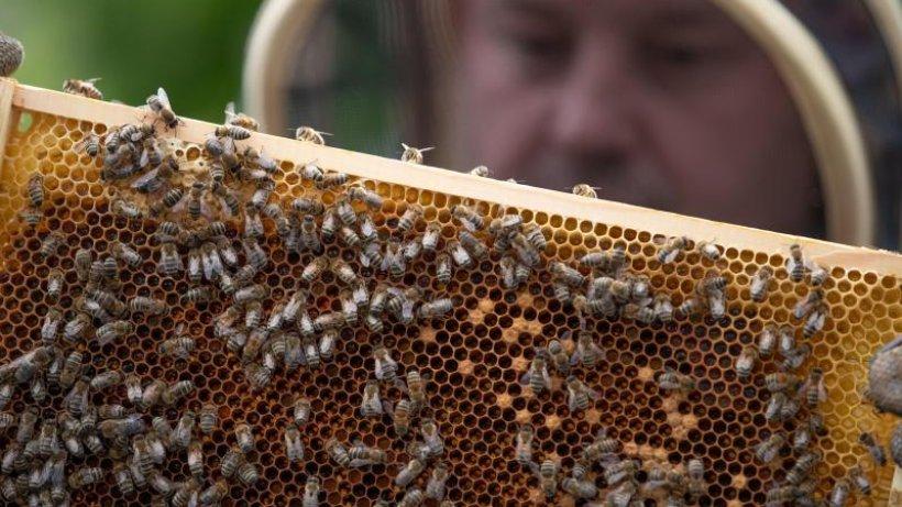 Imkerbund will Zuschüsse für bienenschonende Spritztechnik