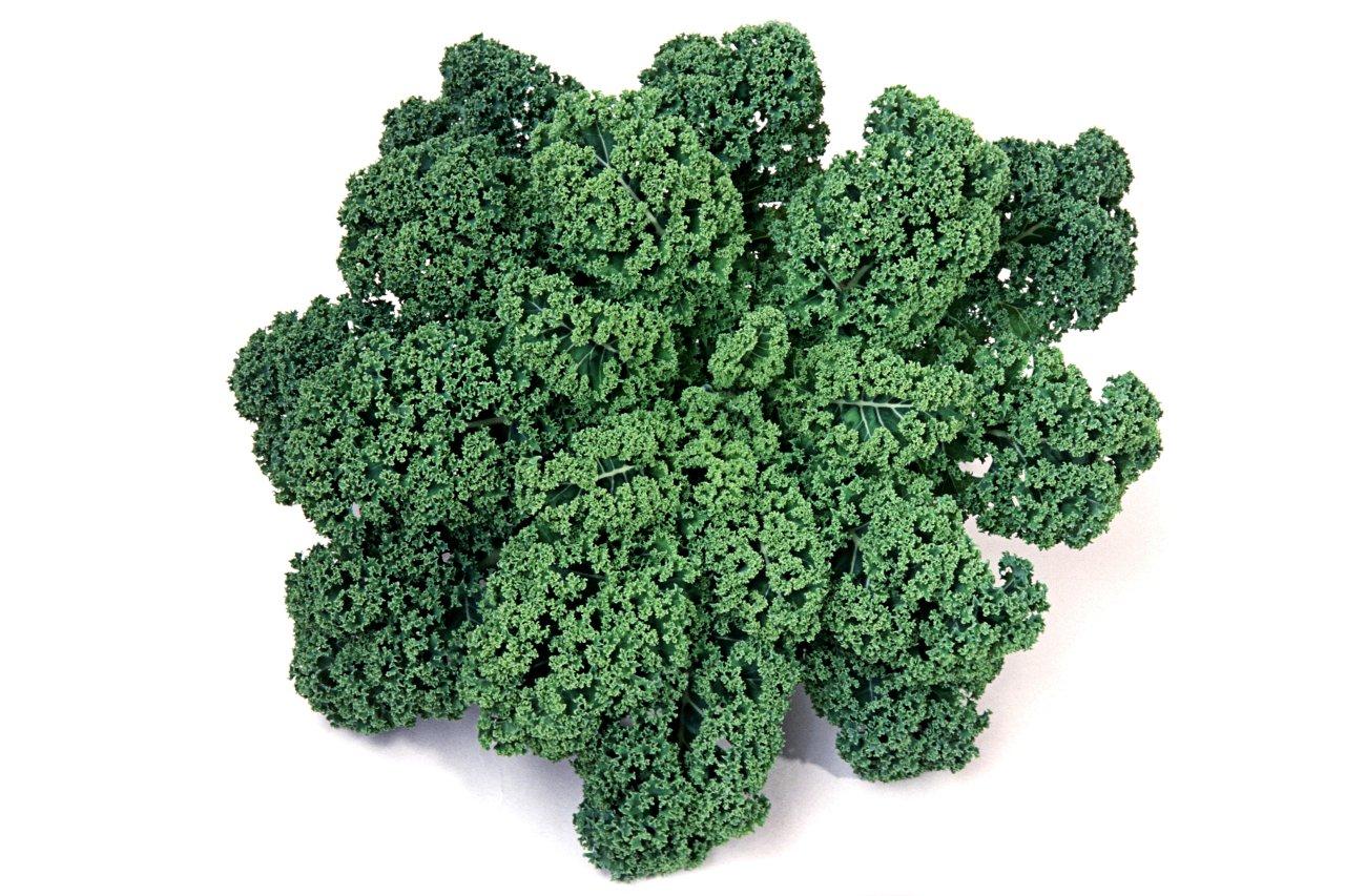 Der unscheinbare Alleskönner: Grünkohl (Brassica oleracea) ist das klassische Wintergericht in Norddeutschland. Sein medizinisches Potenzial entfaltet er auf andere Weise ...