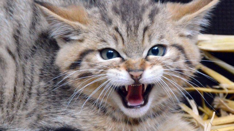 ich werde mal eine wilde katze - norderstedt