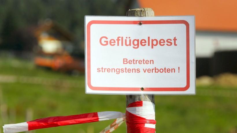 Partnersuche hamburger abendblatt Tarifrechner Strom und Gas - Hamburger Abendblatt