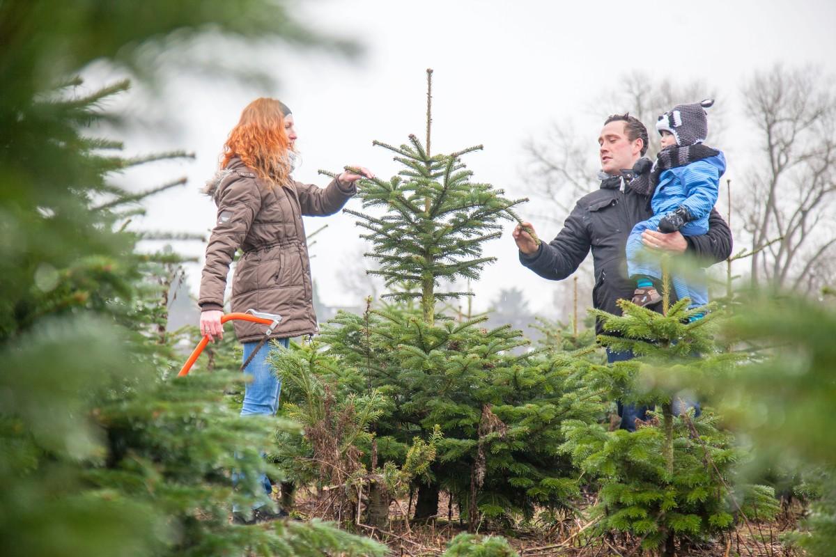 Weihnachtsbaum Selber Fällen.Schlagen Sie Ihren Baum Doch Mal Selbst Norderstedt Hamburger