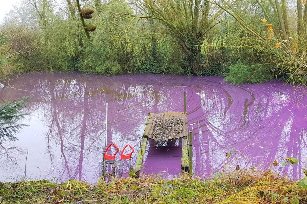 12ec490459e7 Umweltfrevel: Farbe in einen Teich gekippt - Nachrichten - Hamburger ...