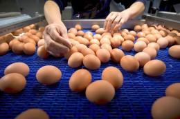 Insektizid: Skandal um Fipronil-Eier – Diese Fragen sind noch offen