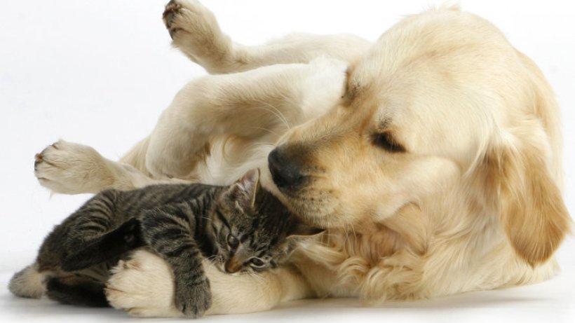 sind hunde und katzen von natur aus feinde  wissen