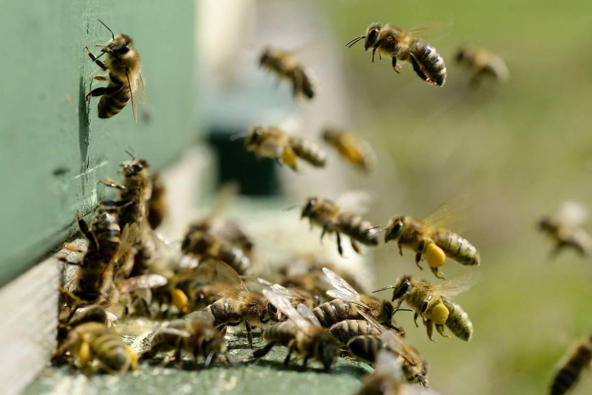 Honigbienendating-Website Dating-Websites für Babyboomer